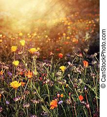 champ, été, fleur, après-midi, lumière