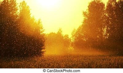champ, 5, coucher soleil, herbe