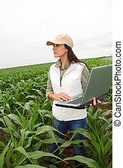 champ, agronomist, plante, maïs, examiner