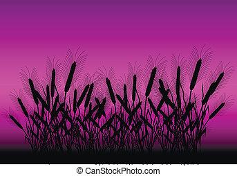 champ, après, blé, coucher soleil