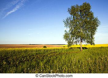 Photographies de stock de champ sable carottes culture - Arbre a carotte ...