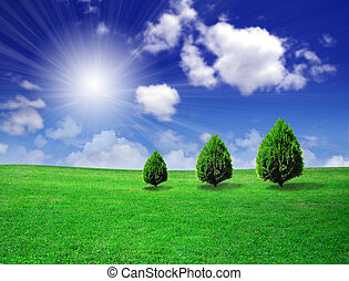 champ, arbres verts