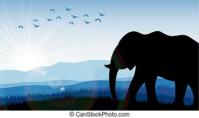 champ, aube, éléphant