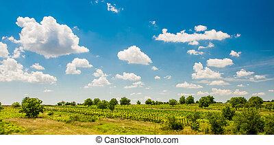 champ blé, ciel, nuageux, sous