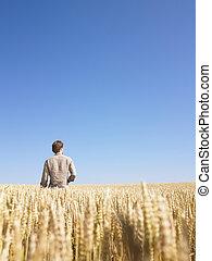 champ, blé, homme