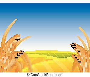 champ, blé, paysage
