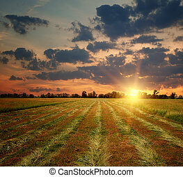 champ, campagne, coucher soleil