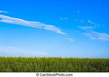 champ, ciel dramatique, coucher soleil, herbe