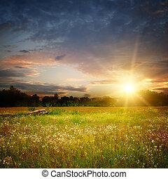 champ, coucher soleil, camomile