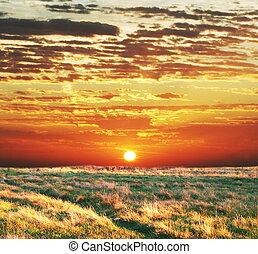 champ, coucher soleil