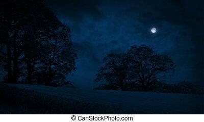 champ, dépassement, nuages, arbres, nuit