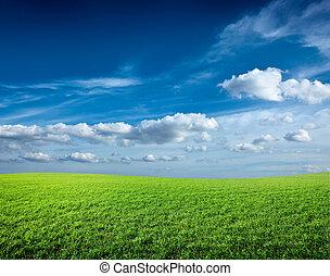 champ, de, vert, frais, herbe, sous, ciel bleu