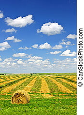 champ ferme, moisson blé