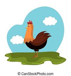 champ ferme, poulet, animal