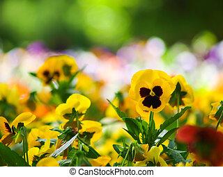 champ, fleur, coloré, fond