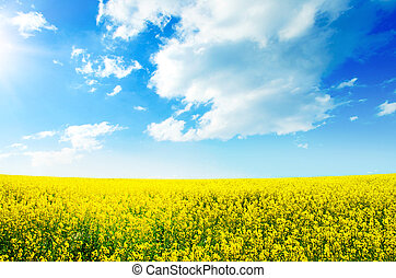 champ, fleur, rapeseed, jaune