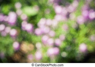 champ, fleurs, blured