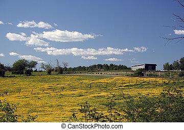 champ, fleurs, jaune, couvert
