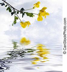 champ, fleurs, jaune