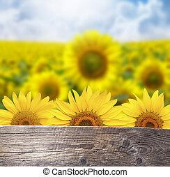 champ, fleurs