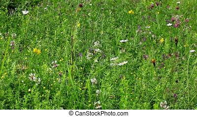 champ, fleurs, vert