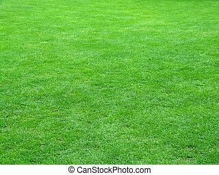 champ, football, herbe