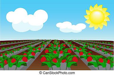 champ, fraise