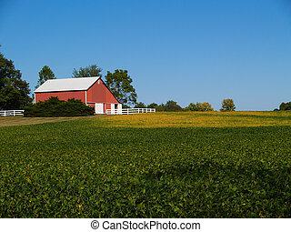 champ, graine soja, grange rouge
