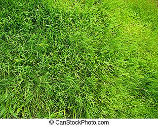 champ, gros plan, herbe, vert