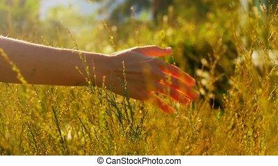 champ, herbes, main, toucher, ensoleillé, femme, été