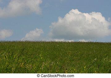 champ, herbeux