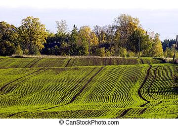 champ, hiver, récolte