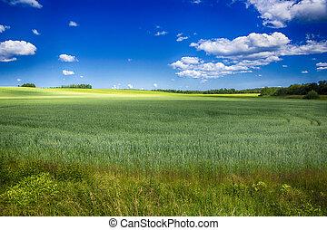 champ, irrigation, à, a, récolte