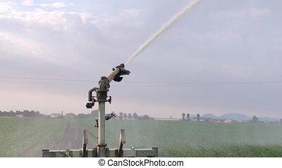 champ, irrigation, maïs