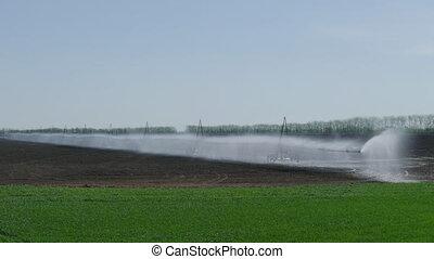 champ, irrigation