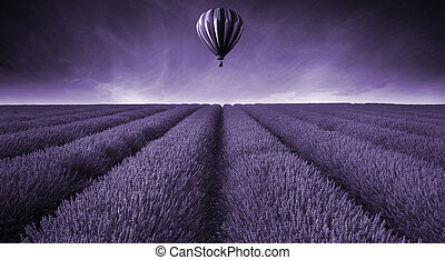 champ lavande, été, coucher soleil, paysage, à, ballon air chaud, modifié tonalité