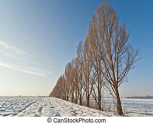 champ, ligne, arbres