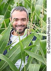 champ, maïs, homme souriant