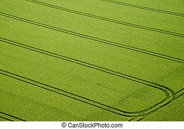 champ maïs, photo, aérien