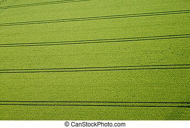 champ maïs, photo aérienne