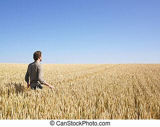 champ, marche, blé, homme