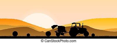 champ, matin, blé, levers de soleil