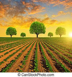 champ, printemps, arbres