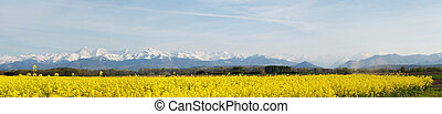 champ, rapeseed, paysage, panoramique