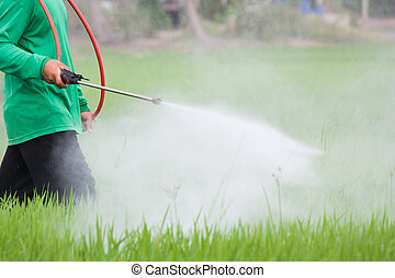 champ riz, paysan, pulvérisation, pesticide