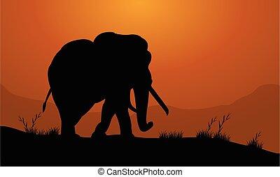 champ, silhouette, éléphant