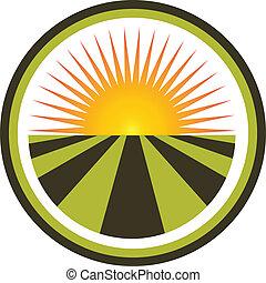 champ, vecteur, coucher soleil, logo