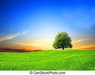 champ vert, à, coucher soleil