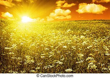 champ vert, à, fleurir, fleurs, et, ciel rouge