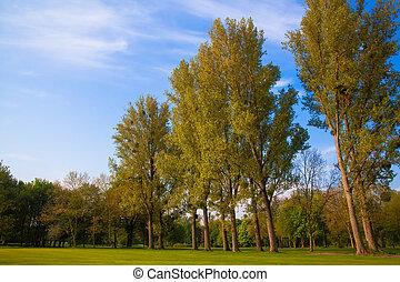 champ, vert, arbres.